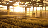 Bioscience and Crop Protection Strategic Research Management & Product Development