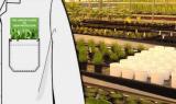 Greenhouse Banner