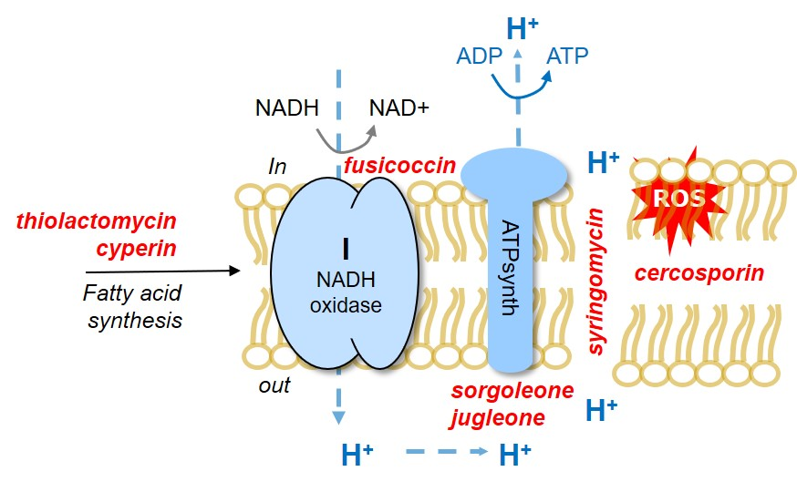 Bioherb mitochon